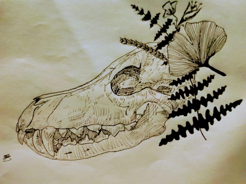 El lobo y la biología