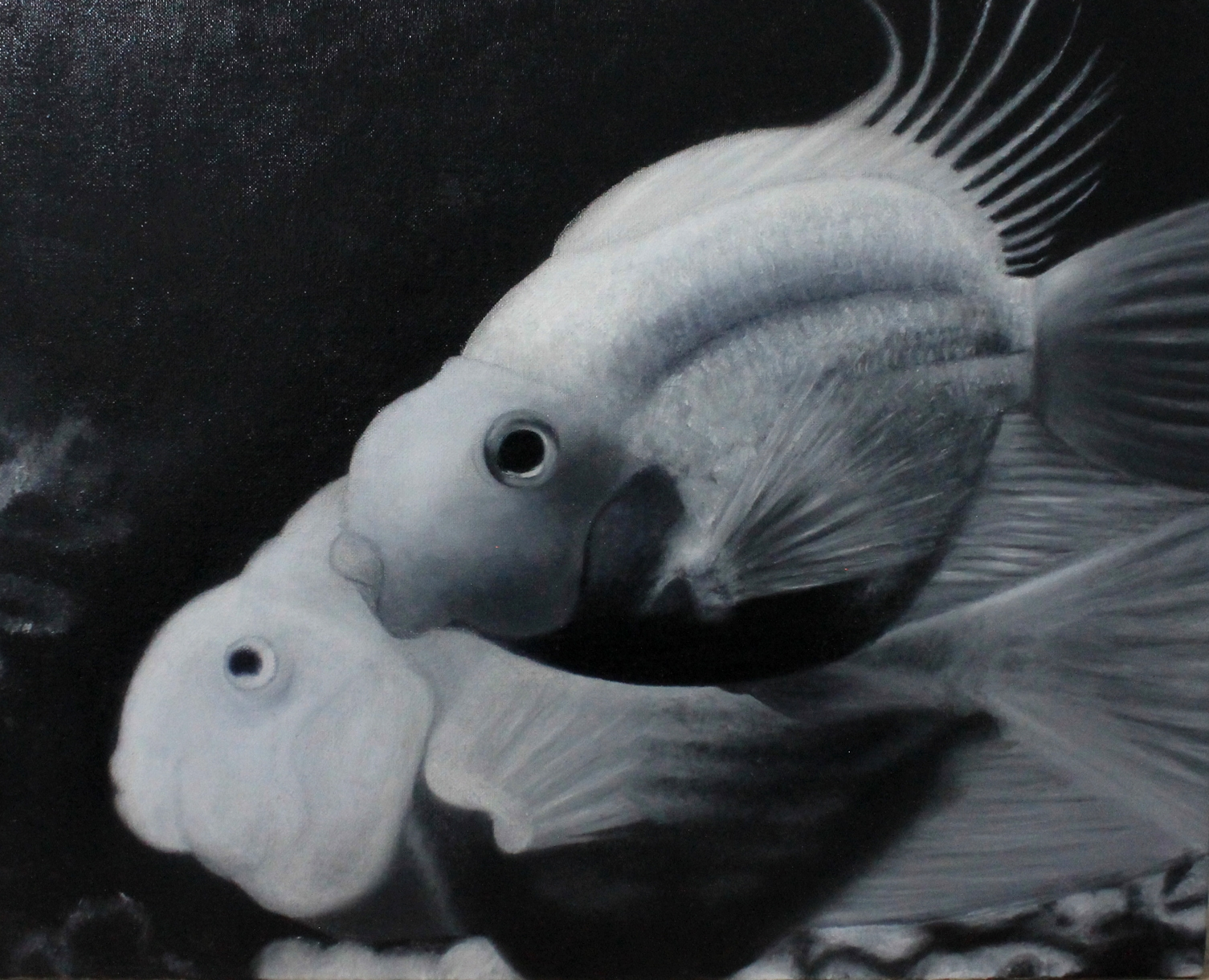 Black and white fish.