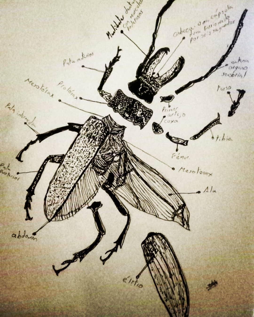 La anatomía de un escarabajo