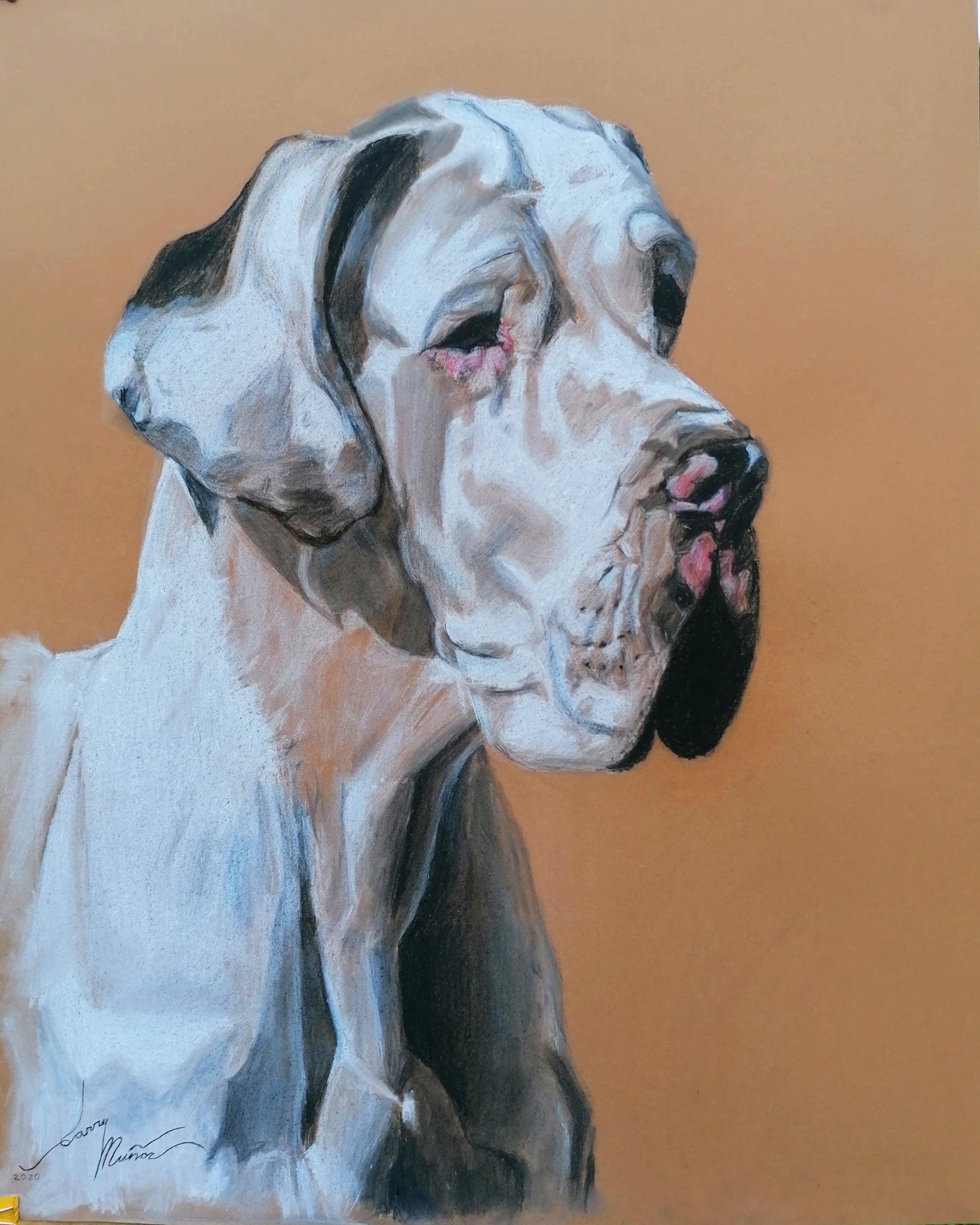 Portrait of Iasmin (German Bulldog)
