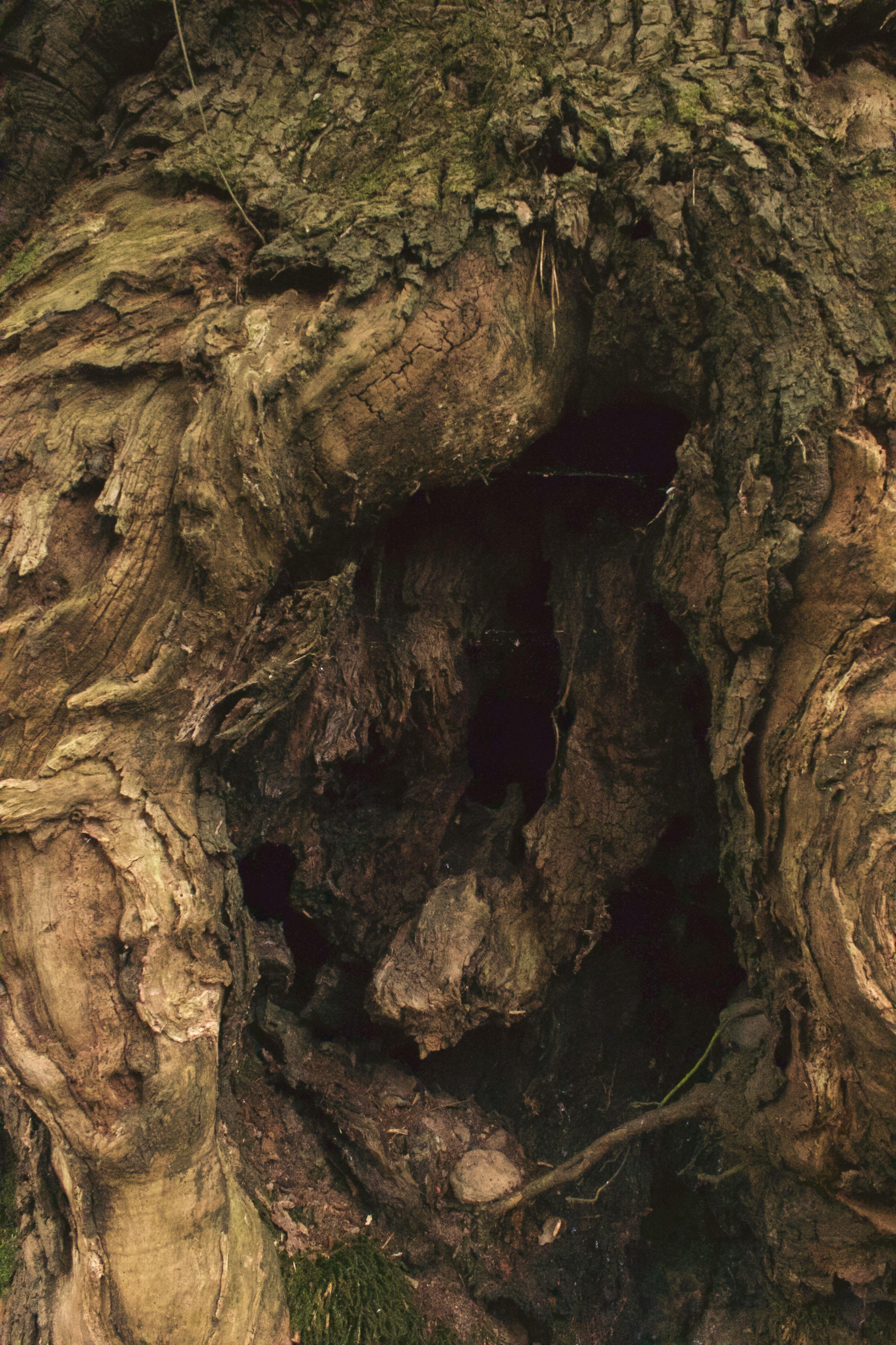 Holzwege