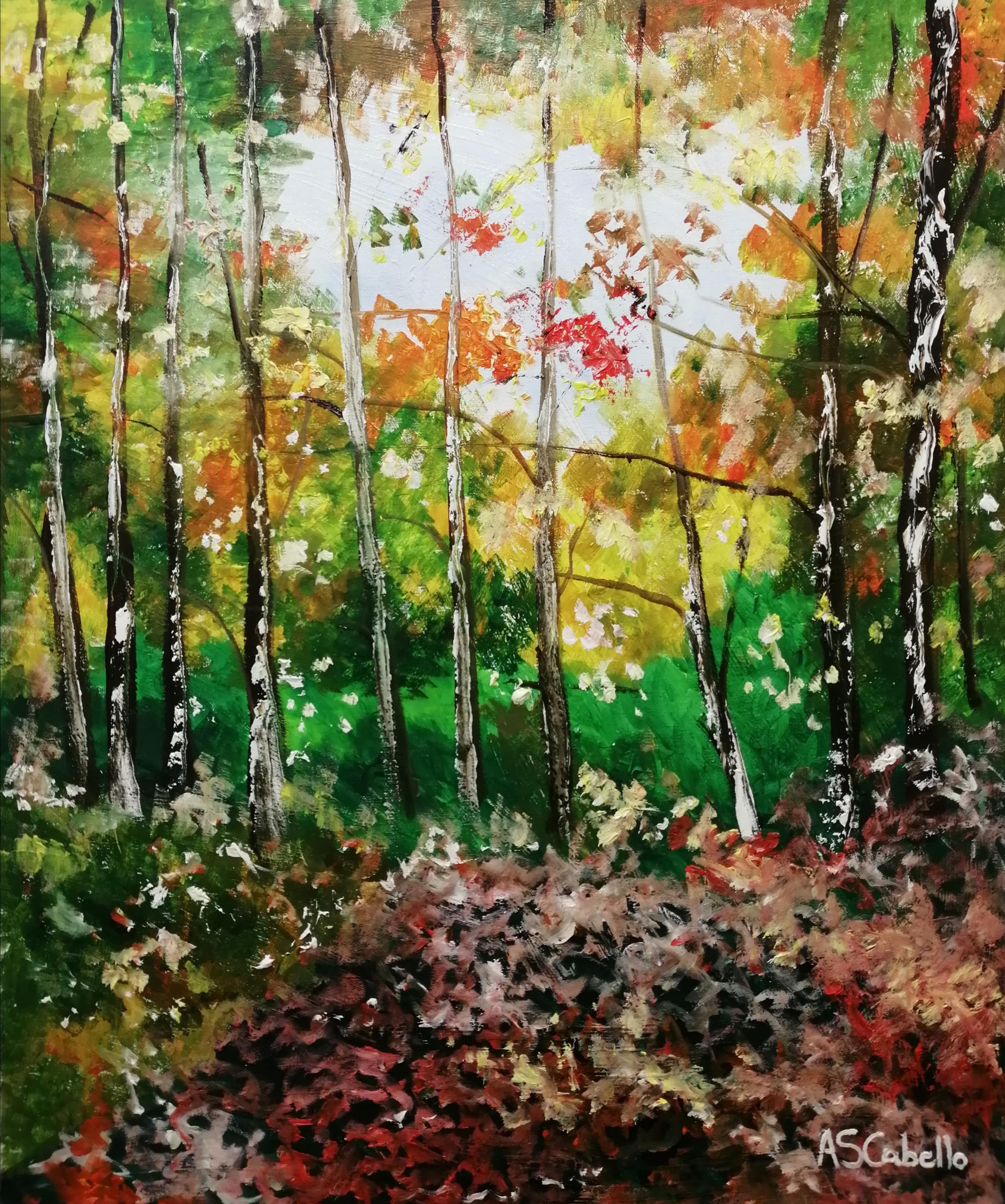 La luz de un bosque
