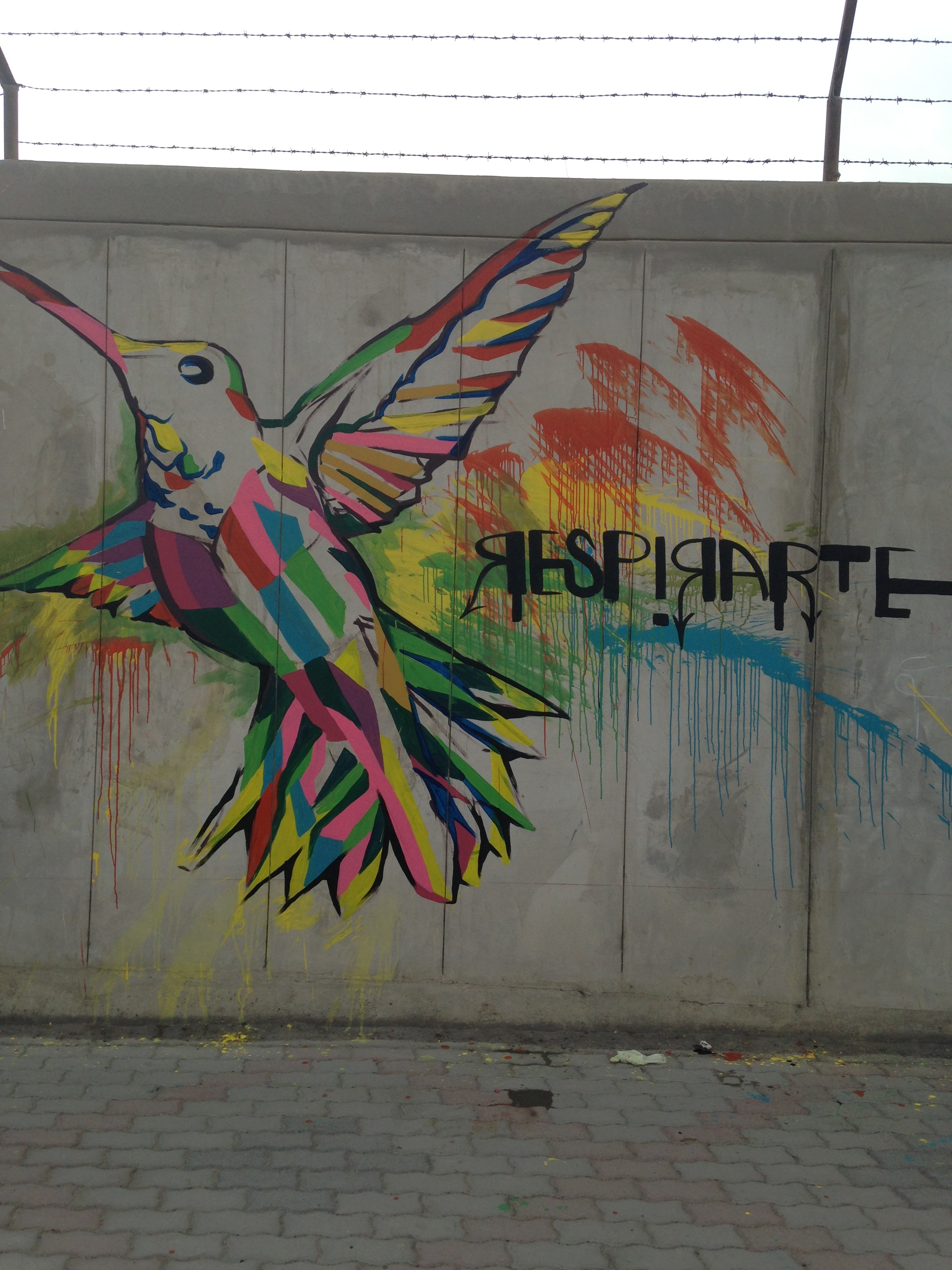 The vivacious hummingbird