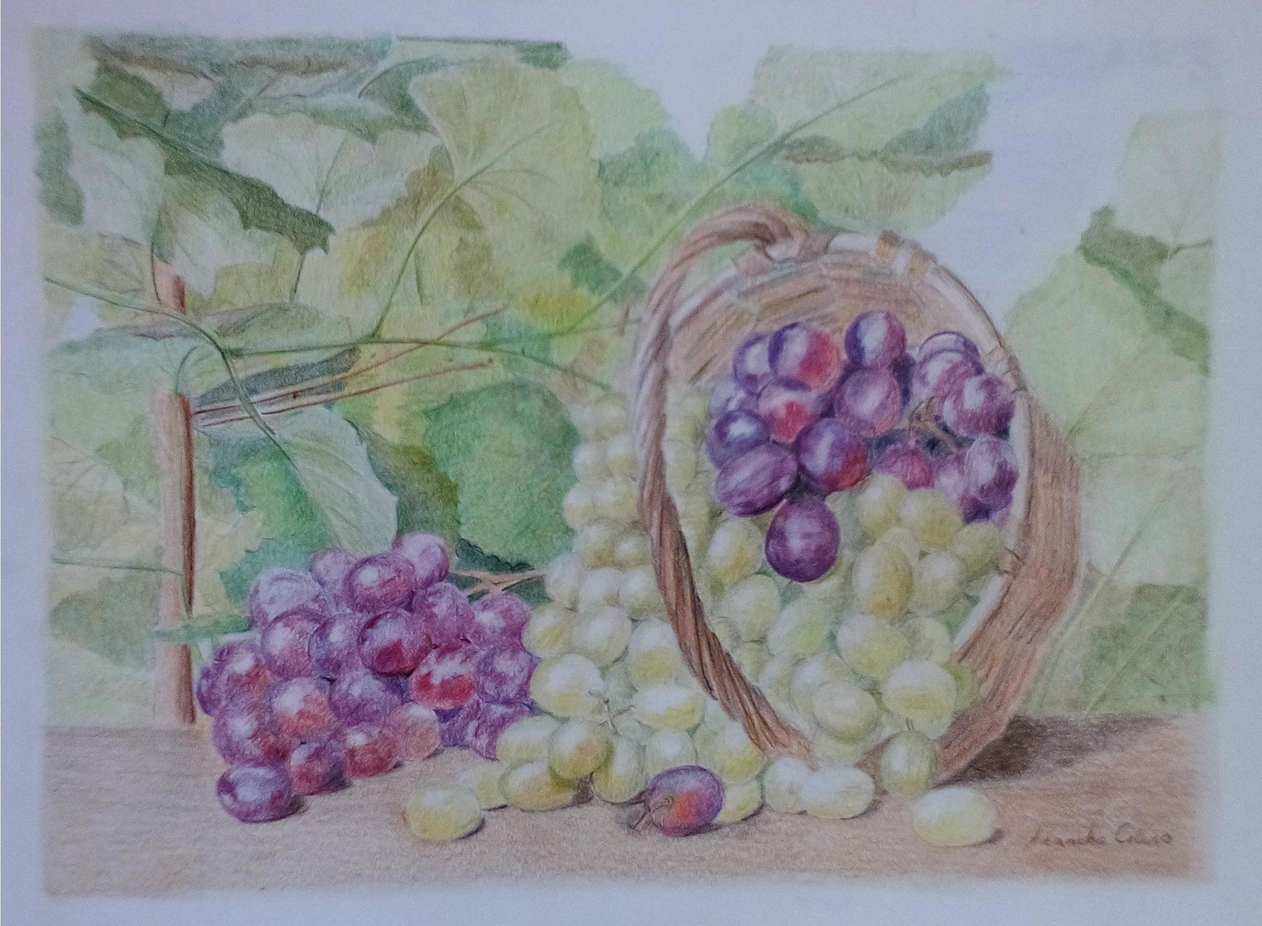 Dibujo En Linea Uva: Cesto De Uvas, Lápiz, Dibujos, Comprar Arte Original