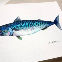 caballa Sea Food Collection