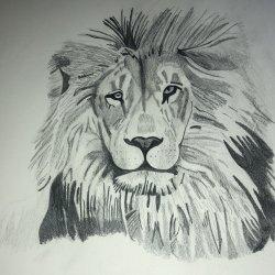 Dibujo a lápiz Leon