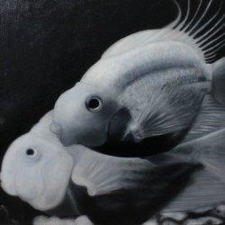 Peces en blanco y negro