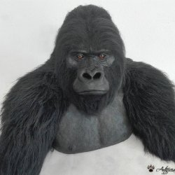 Synthetic mountain gorilla bust