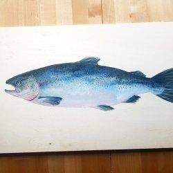 Salmon - Sea Food Collection