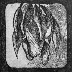 mangobyn.jpg