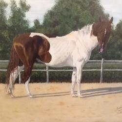 Mi caballo Pinto