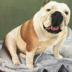 Tara. Retrato de mascotas por encargo