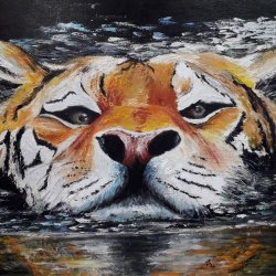 34- Tiger in the water.jpg