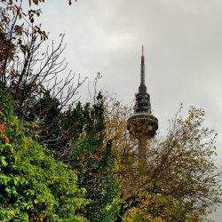 Fall, Piruli Madrid