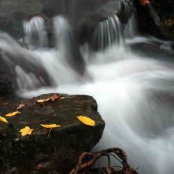 Small waterfall with autumnal leaves.