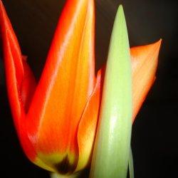"""Floral geometry"""