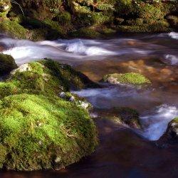 Musgos verdes en el rio.