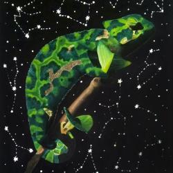 Camaleón y constelaciones