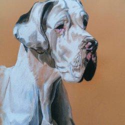 Retrato de Iasmin (dogo alemán)