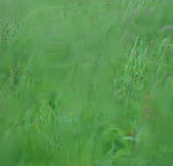 Among the grass. Series.