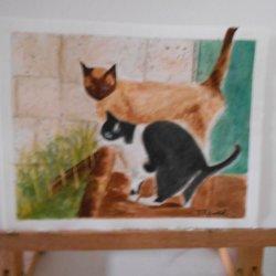 Gatos de casa