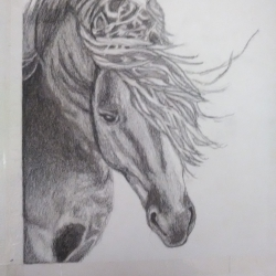 Equinos005