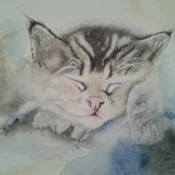 kitten asleep