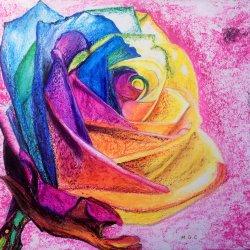 Multicolor Pink