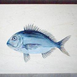 DORADA - Sea Food Collection