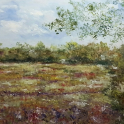 Primeras flores en los campos