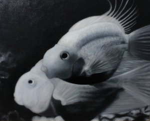Black and white fish