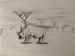 Rinoceronte en sabana a lapiz