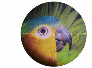 In their nest Parrot Aratinga