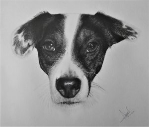 PERSONALIZED PORTRAITS PENCIL AND CHARCOAL PETS