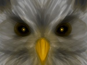 'Little Angry Owl'