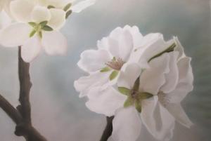 Flores de Almendro/ Almond Tree Flowers
