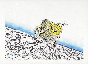 Sparrow on the edge of the lake - Carlos Seguí