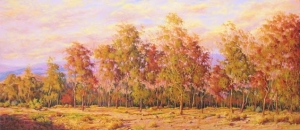 Eucalyptus forest, Sierra de los Filabres, Calar BACKGROUND ALTO.ALMERÍA.
