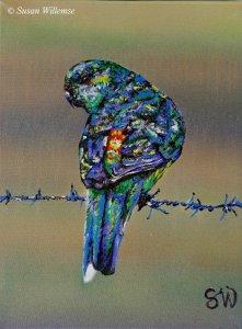 Red-rumped Parakeet