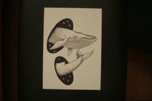 Ballenas estelares