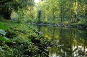 Reflejos en el rio Ason