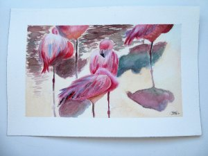 Watercolor pelicans