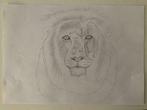 Cabeza de leon a lápiz