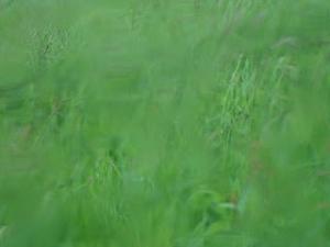 Estar entre la hierba. Serie.