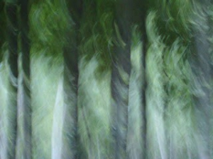 bosque i.JPG