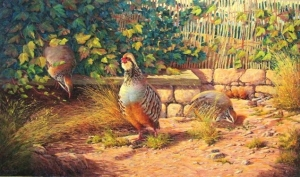 Partridges CORRAL
