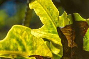 1 plant