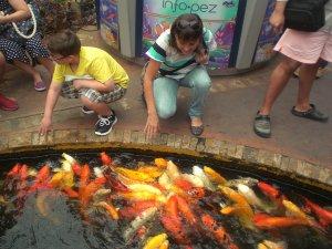 sancocho de pescado arcoiris