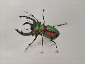 Escarabajo Hipnotizador