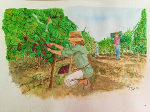 The grape pickers